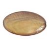 Shell Oval Shape 15x25mm Dark Gold